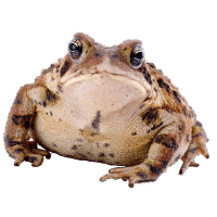 Toads & Frogs